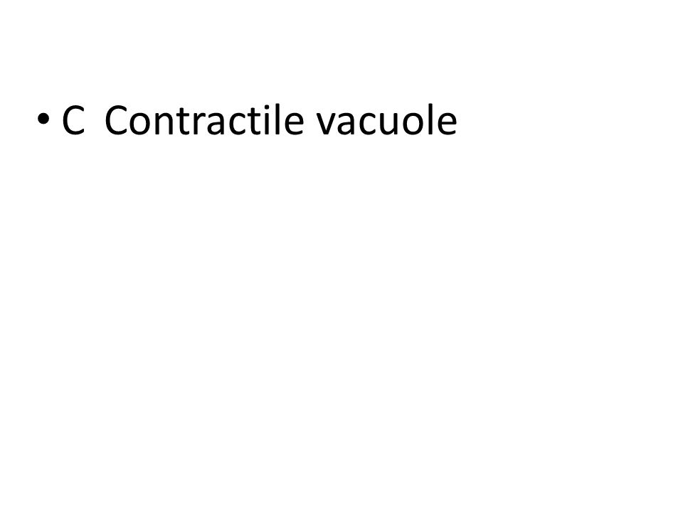 CContractile vacuole