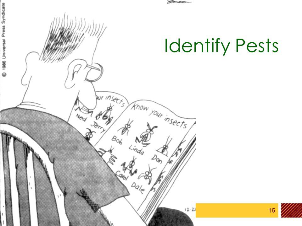 15 Identify Pests