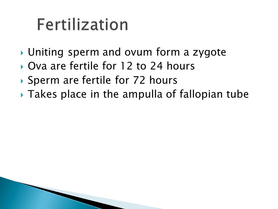  Uniting sperm and ovum form a zygote  Ova are fertile for 12 to 24 hours  Sperm are fertile for 72 hours  Takes place in the ampulla of fallopian tube