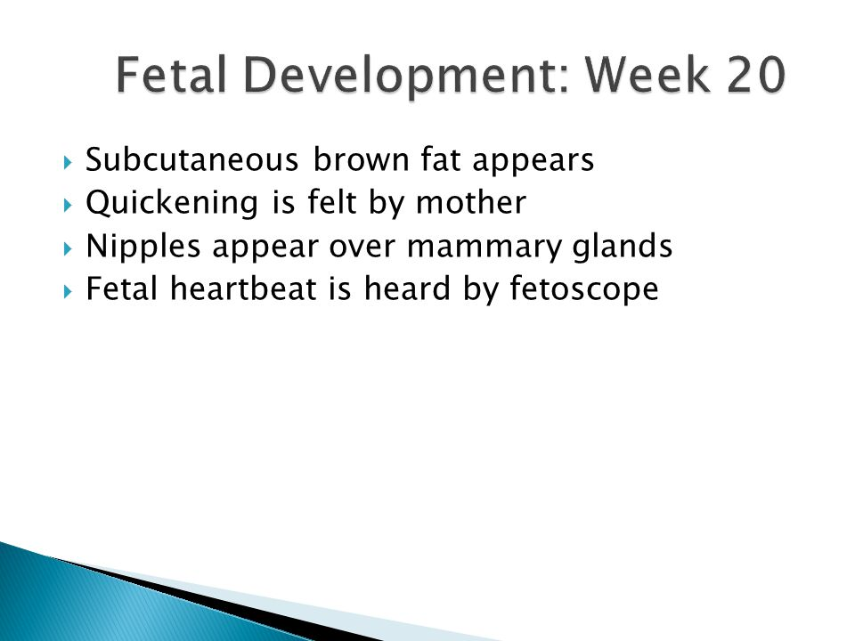  Subcutaneous brown fat appears  Quickening is felt by mother  Nipples appear over mammary glands  Fetal heartbeat is heard by fetoscope