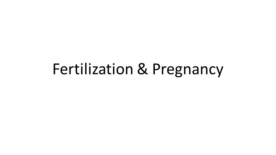 Pregnancy —time from fertilization until infant is born —developing offspring —period of time from fertilization until week 8 —week 9 until birth --date of last period until birth (approximately 280 days)