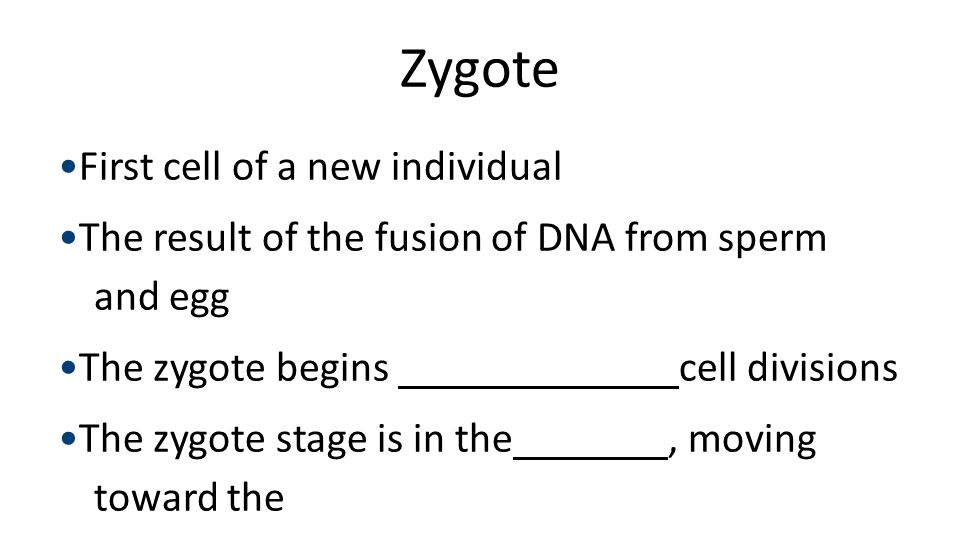 Zygote First cell of a new individual The result of the fusion of DNA from sperm and egg The zygote begins cell divisions The zygote stage is in the,