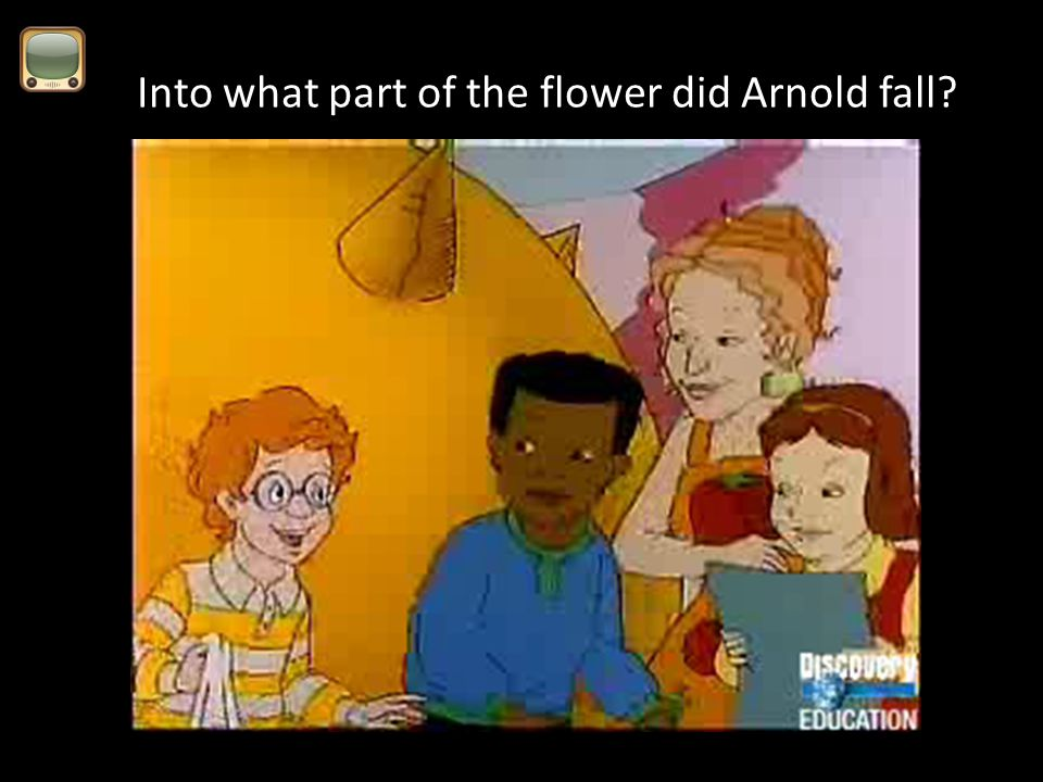 Into what part of the flower did Arnold fall?
