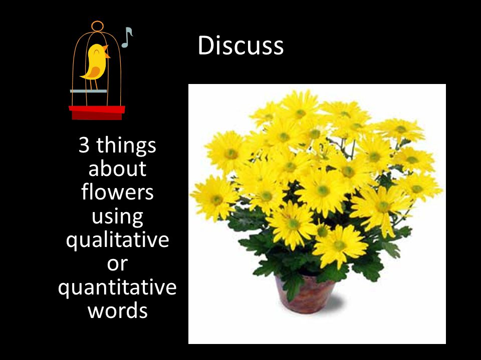 Discuss 3 things about flowers using qualitative or quantitative words