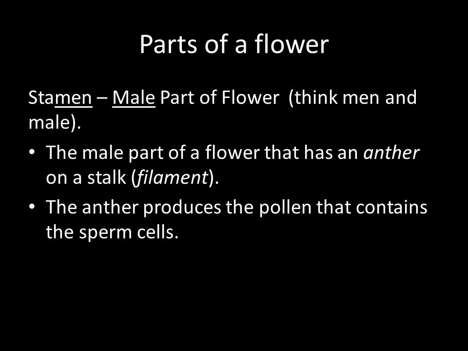 Parts of a flower Stamen – Male Part of Flower (think men and male). The male part of a flower that has an anther on a stalk (filament). The anther pr