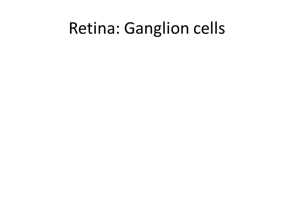 Retina: Ganglion cells