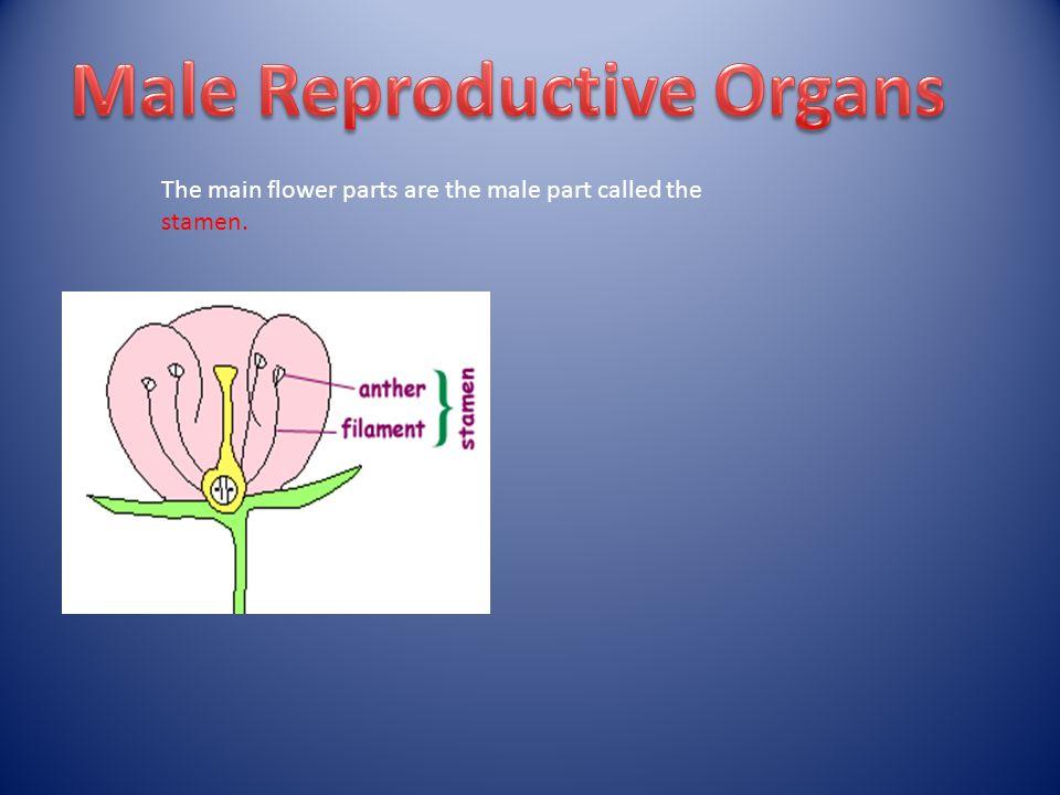 The female part called the pistil.