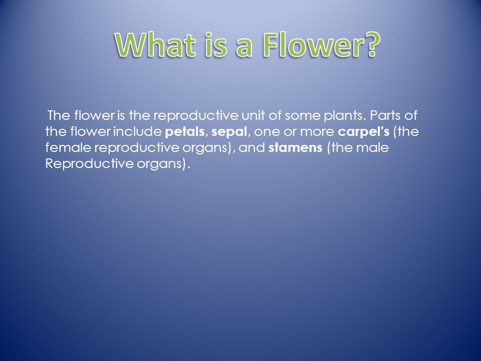 1.What is a flower What is a flower.