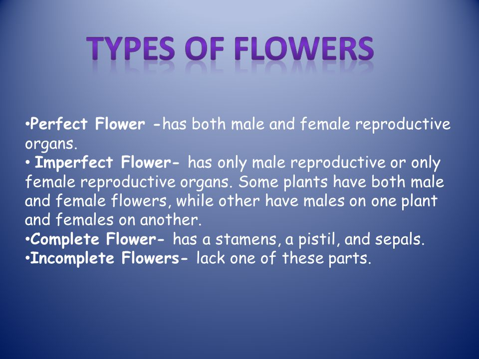 Perfect Flower -has both male and female reproductive organs.