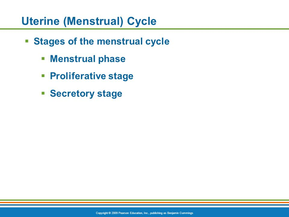 Copyright © 2009 Pearson Education, Inc., publishing as Benjamin Cummings Uterine (Menstrual) Cycle  Stages of the menstrual cycle  Menstrual phase