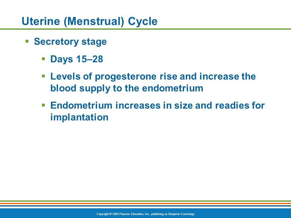Copyright © 2009 Pearson Education, Inc., publishing as Benjamin Cummings Uterine (Menstrual) Cycle  Secretory stage  Days 15–28  Levels of progest