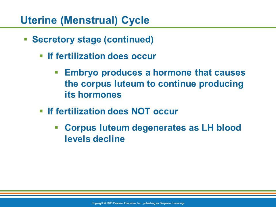 Copyright © 2009 Pearson Education, Inc., publishing as Benjamin Cummings Uterine (Menstrual) Cycle  Secretory stage (continued)  If fertilization d