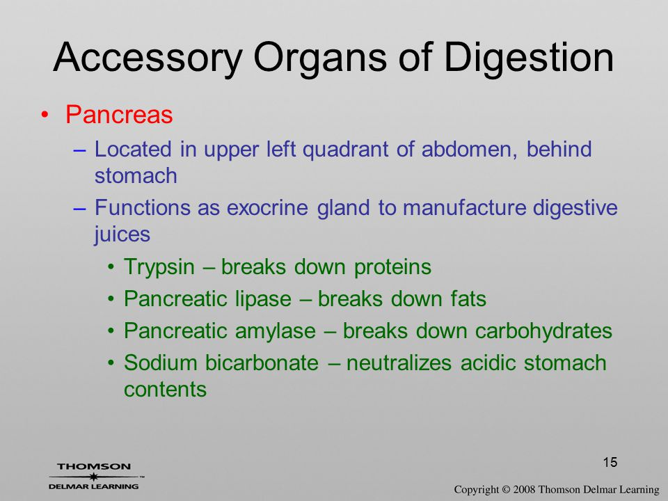 15 Accessory Organs of Digestion Pancreas –Located in upper left quadrant of abdomen, behind stomach –Functions as exocrine gland to manufacture diges