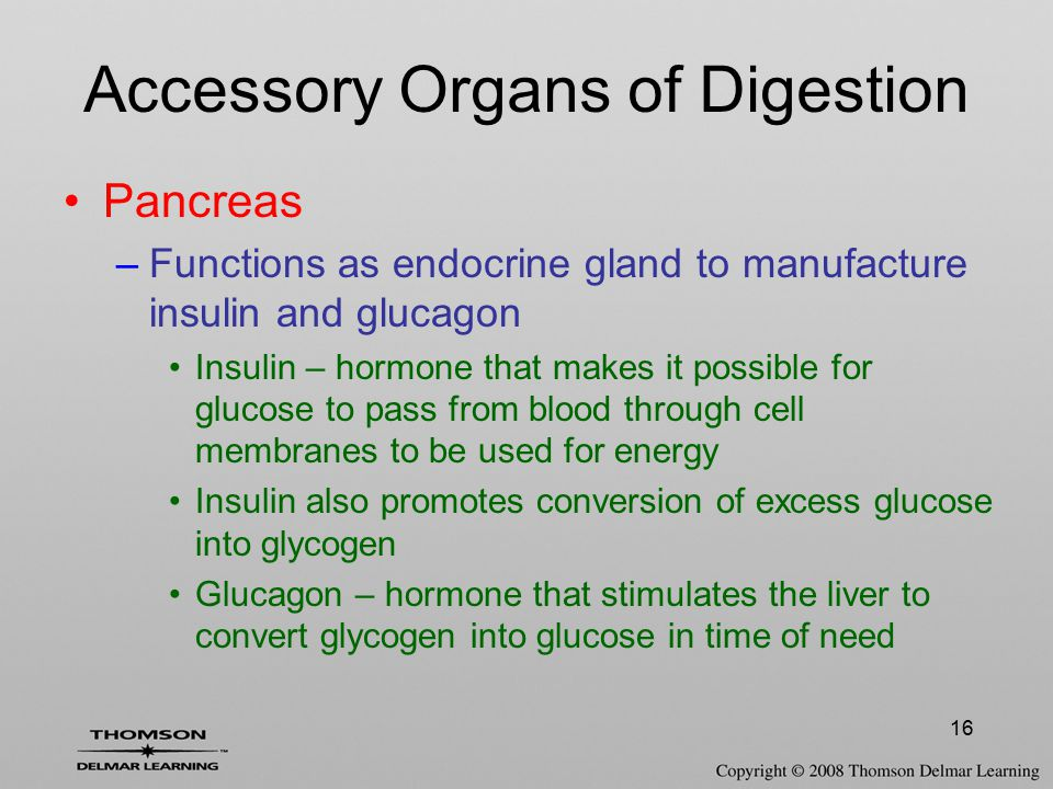 16 Accessory Organs of Digestion Pancreas –Functions as endocrine gland to manufacture insulin and glucagon Insulin – hormone that makes it possible f