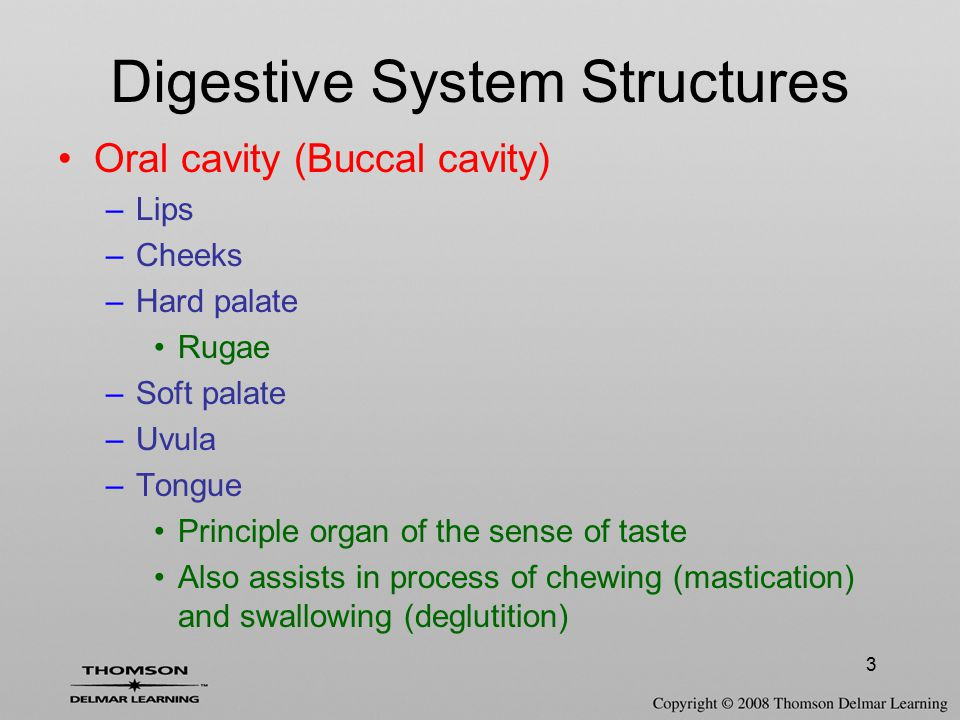 3 Oral cavity (Buccal cavity) –Lips –Cheeks –Hard palate Rugae –Soft palate –Uvula –Tongue Principle organ of the sense of taste Also assists in proce