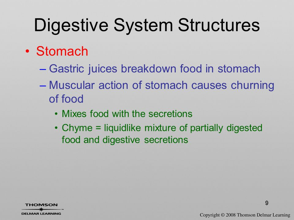 9 Stomach –Gastric juices breakdown food in stomach –Muscular action of stomach causes churning of food Mixes food with the secretions Chyme = liquidl
