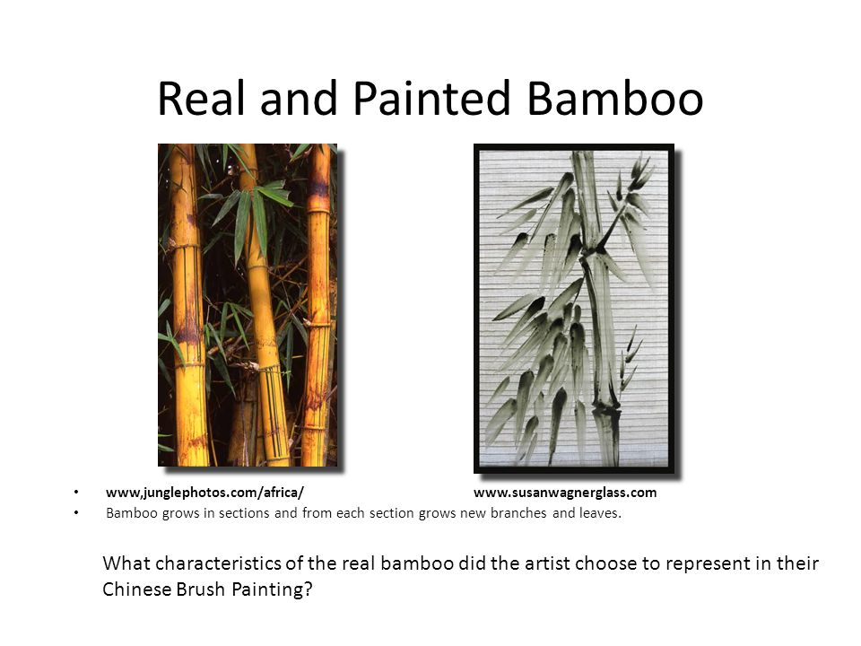 Real and Painted Bamboo www,junglephotos.com/africa/ www.susanwagnerglass.com Bamboo grows in sections and from each section grows new branches and leaves.