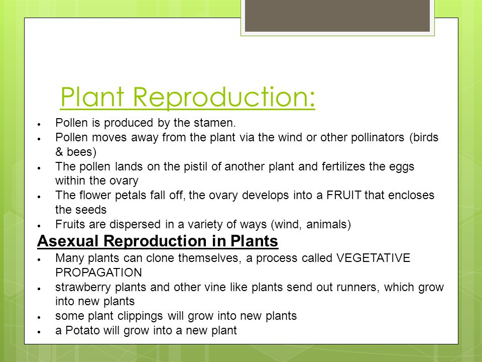 Plant Reproduction:  Pollen is produced by the stamen.  Pollen moves away from the plant via the wind or other pollinators (birds & bees)  The poll