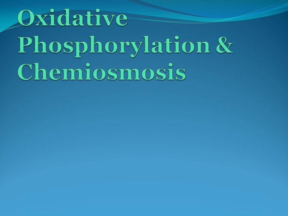 Oxidative Phosphorylation at the Electron Transport Chain