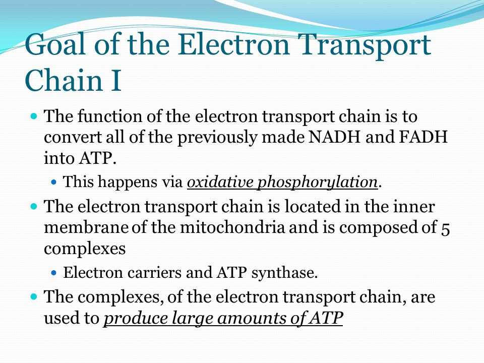 Yields of ATP 1 FADH produces 2 ATP's 1 NADH produces 3 ATP's However, one must be mindful of what happens to the NADH entering into the mitochondria after glycolysis has occurred.