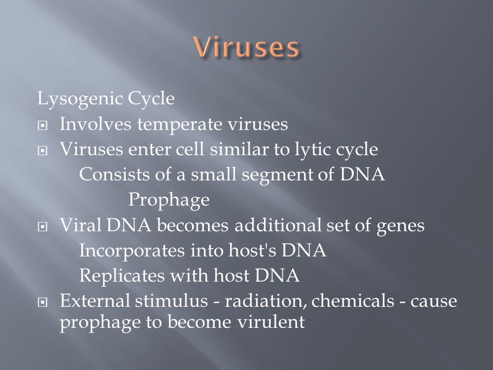 Lysogenic Cycle  Involves temperate viruses  Viruses enter cell similar to lytic cycle Consists of a small segment of DNA Prophage  Viral DNA becom