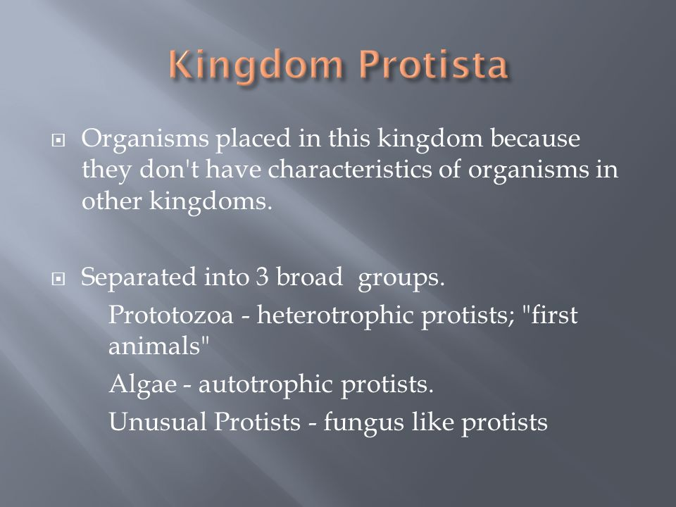  Organisms placed in this kingdom because they don't have characteristics of organisms in other kingdoms.  Separated into 3 broad groups. Prototozoa