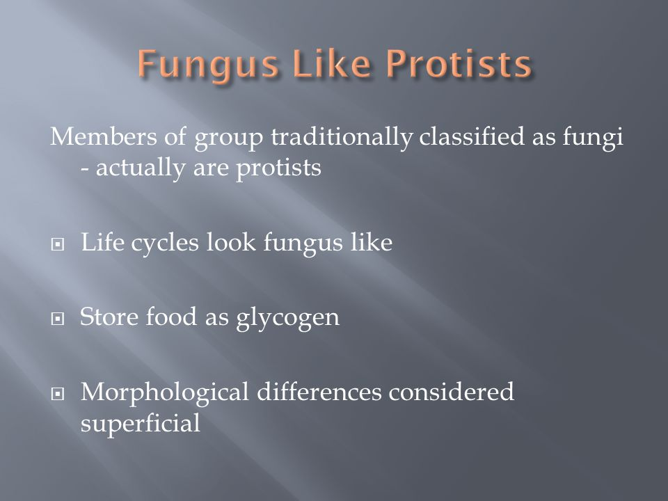 Members of group traditionally classified as fungi - actually are protists  Life cycles look fungus like  Store food as glycogen  Morphological dif