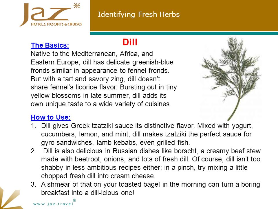 Identifying Fresh Herbs Dill The Basics: Native to the Mediterranean, Africa, and Eastern Europe, dill has delicate greenish-blue fronds similar in appearance to fennel fronds.