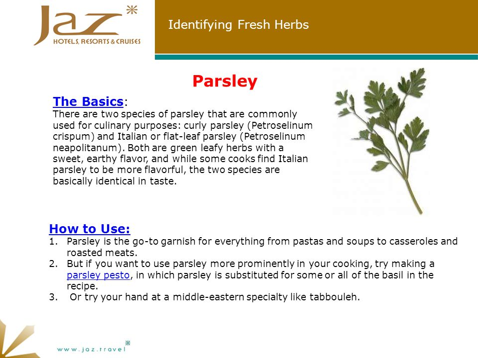 Identifying Fresh Herbs Parsley The Basics: There are two species of parsley that are commonly used for culinary purposes: curly parsley (Petroselinum crispum) and Italian or flat-leaf parsley (Petroselinum neapolitanum).
