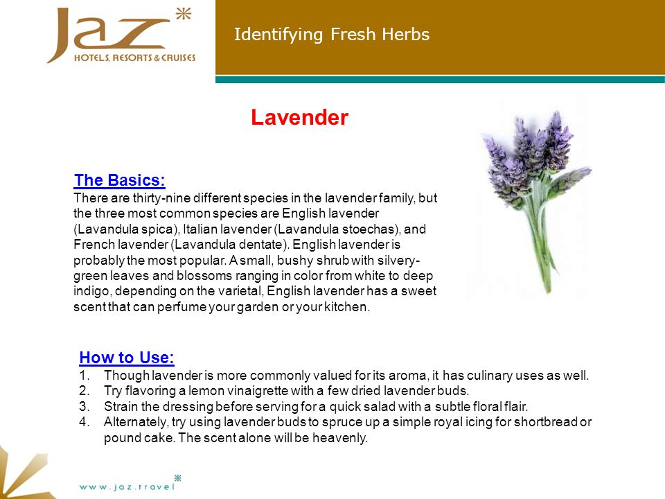 Identifying Fresh Herbs Lavender The Basics: There are thirty-nine different species in the lavender family, but the three most common species are English lavender (Lavandula spica), Italian lavender (Lavandula stoechas), and French lavender (Lavandula dentate).