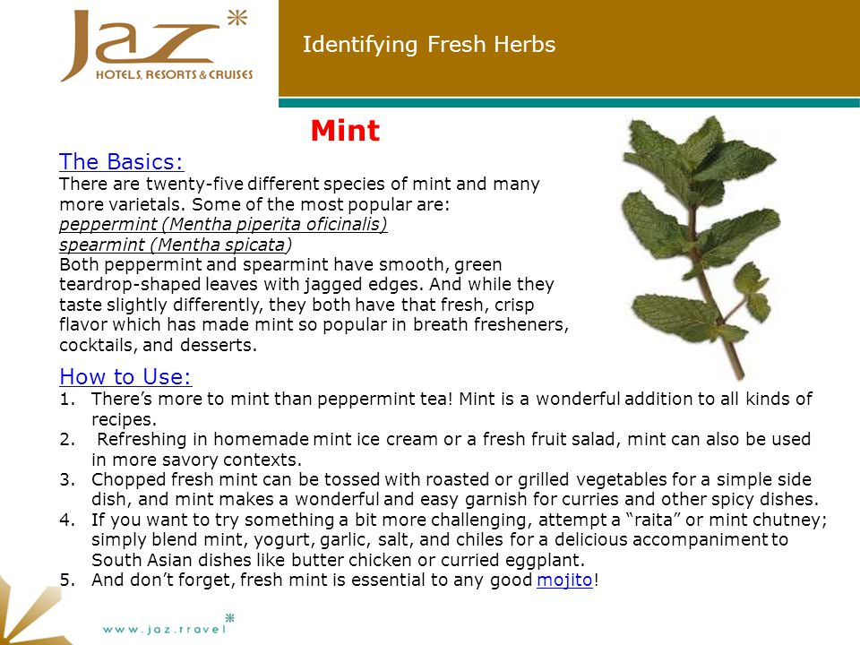 Identifying Fresh Herbs Mint The Basics: There are twenty-five different species of mint and many more varietals.