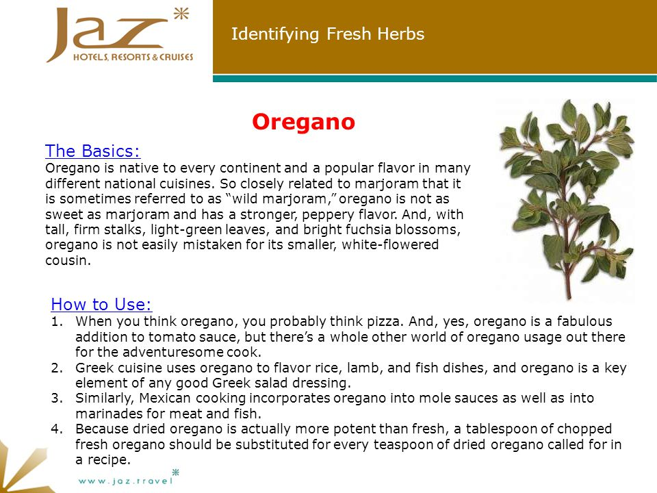 Identifying Fresh Herbs Oregano The Basics: Oregano is native to every continent and a popular flavor in many different national cuisines.