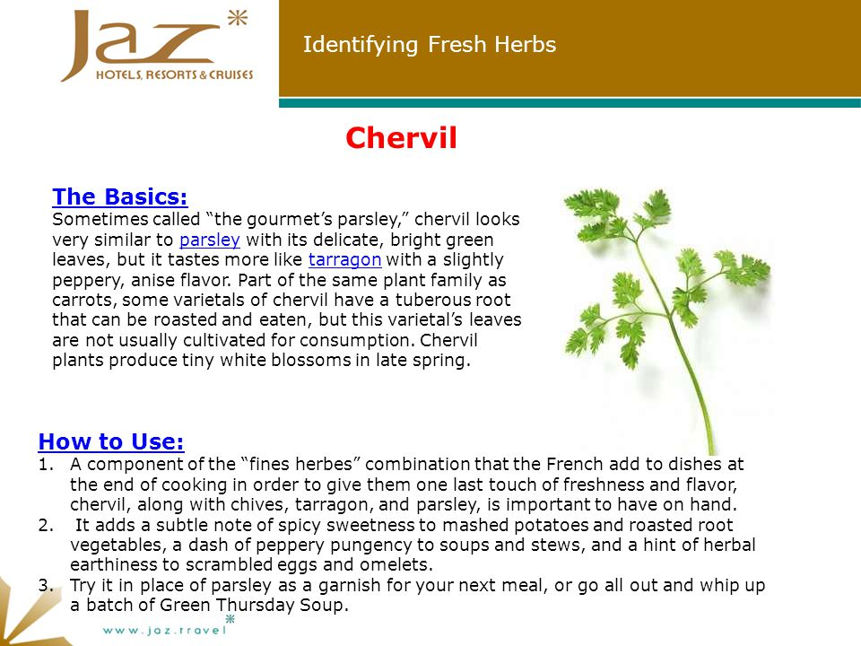 Identifying Fresh Herbs How to Use: 1.A component of the fines herbes combination that the French add to dishes at the end of cooking in order to give them one last touch of freshness and flavor, chervil, along with chives, tarragon, and parsley, is important to have on hand.