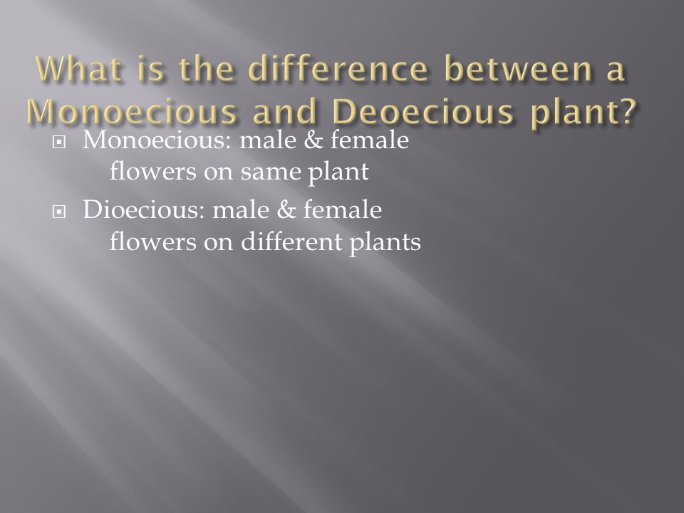  Monoecious: male & female flowers on same plant  Dioecious: male & female flowers on different plants