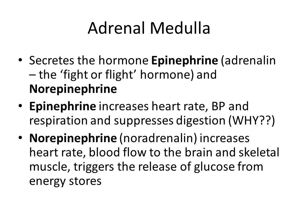 Adrenal Medulla Secretes the hormone Epinephrine (adrenalin – the 'fight or flight' hormone) and Norepinephrine Epinephrine increases heart rate, BP and respiration and suppresses digestion (WHY??) Norepinephrine (noradrenalin) increases heart rate, blood flow to the brain and skeletal muscle, triggers the release of glucose from energy stores