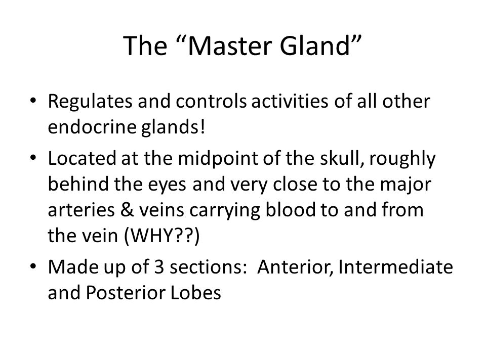 The Master Gland Regulates and controls activities of all other endocrine glands.