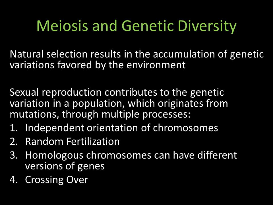 Meiosis and Genetic Diversity Natural selection results in the accumulation of genetic variations favored by the environment Sexual reproduction contributes to the genetic variation in a population, which originates from mutations, through multiple processes: 1.Independent orientation of chromosomes 2.Random Fertilization 3.Homologous chromosomes can have different versions of genes 4.Crossing Over