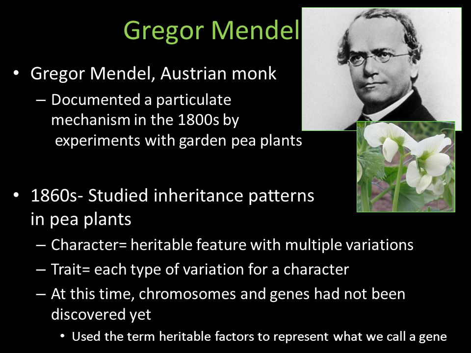 Gregor Mendel Gregor Mendel, Austrian monk – Documented a particulate mechanism in the 1800s by experiments with garden pea plants 1860s- Studied inheritance patterns in pea plants – Character= heritable feature with multiple variations – Trait= each type of variation for a character – At this time, chromosomes and genes had not been discovered yet Used the term heritable factors to represent what we call a gene