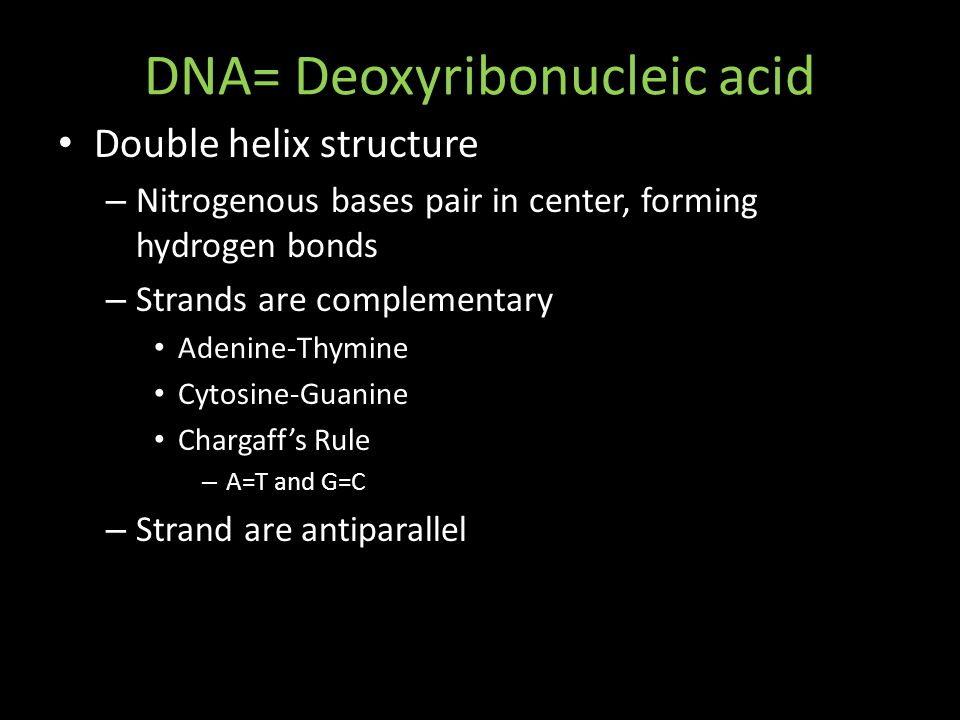 DNA= Deoxyribonucleic acid Double helix structure – Nitrogenous bases pair in center, forming hydrogen bonds – Strands are complementary Adenine-Thymine Cytosine-Guanine Chargaff's Rule – A=T and G=C – Strand are antiparallel