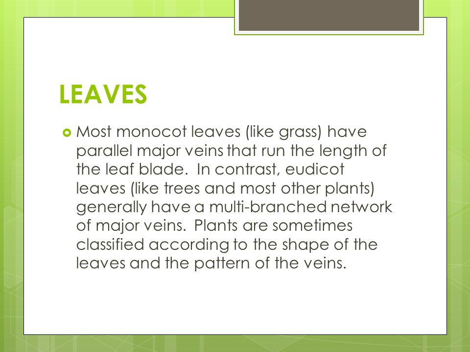 LEAVES  Most monocot leaves (like grass) have parallel major veins that run the length of the leaf blade. In contrast, eudicot leaves (like trees and