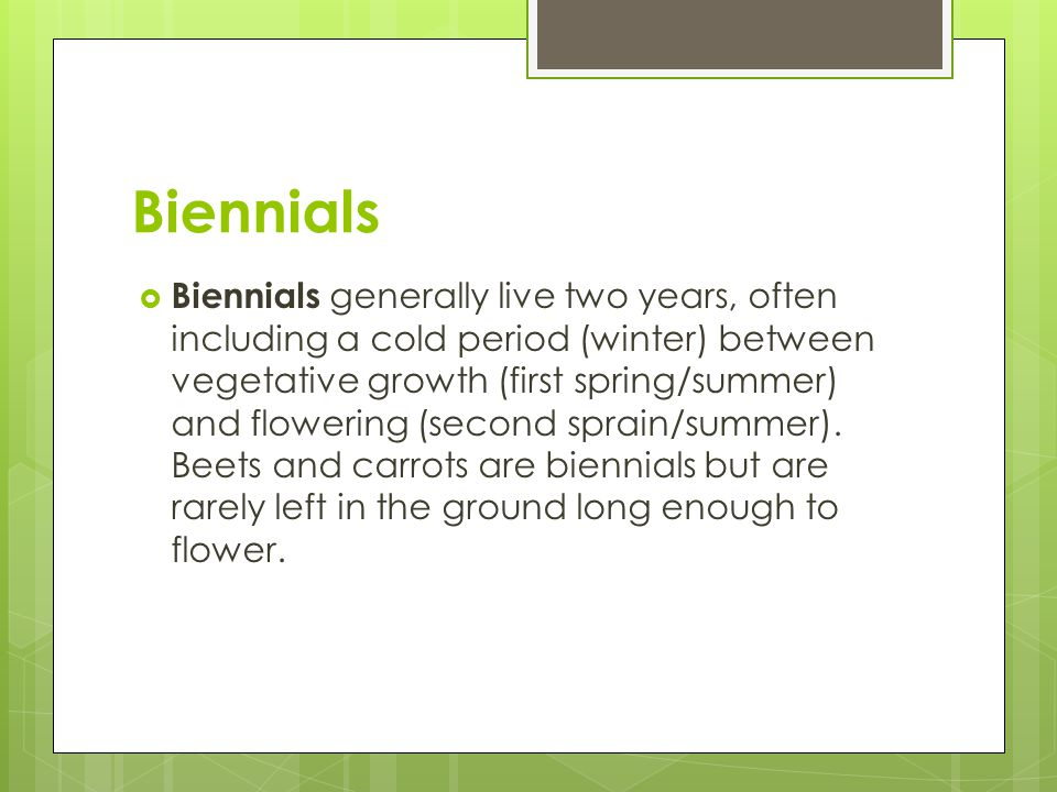 Biennials  Biennials generally live two years, often including a cold period (winter) between vegetative growth (first spring/summer) and flowering (