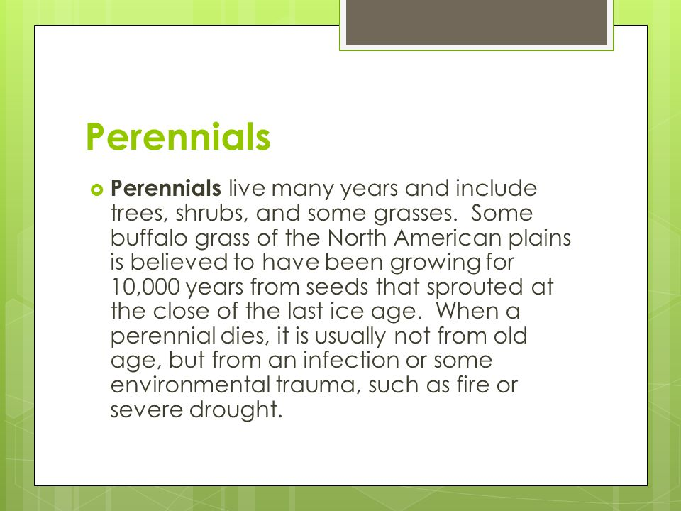 Perennials  Perennials live many years and include trees, shrubs, and some grasses. Some buffalo grass of the North American plains is believed to ha