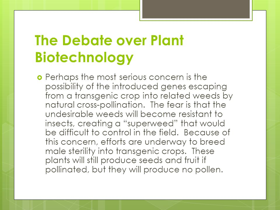 The Debate over Plant Biotechnology  Perhaps the most serious concern is the possibility of the introduced genes escaping from a transgenic crop into