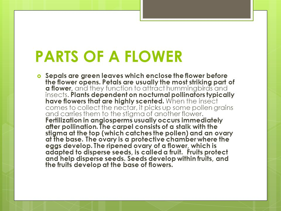 PARTS OF A FLOWER  Sepals are green leaves which enclose the flower before the flower opens. Petals are usually the most striking part of a flower, a
