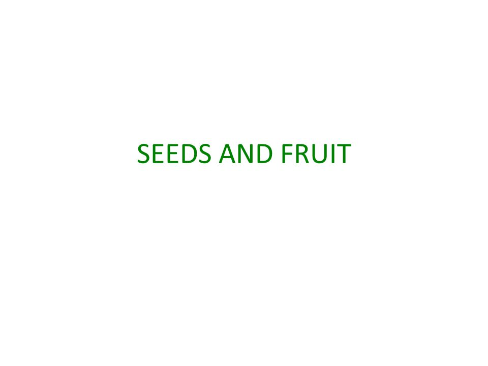 SEEDS AND FRUIT