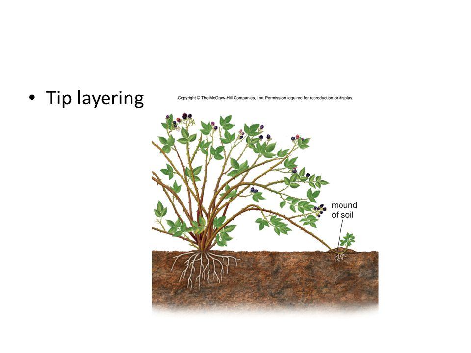 Tip layering