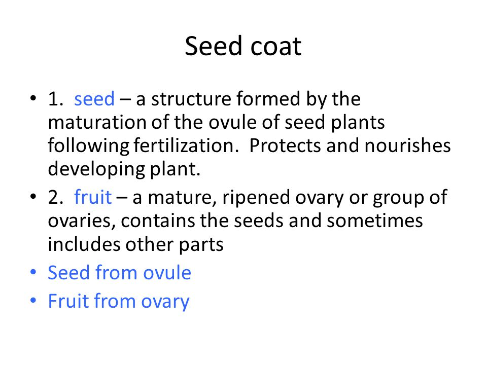Seed coat 1.