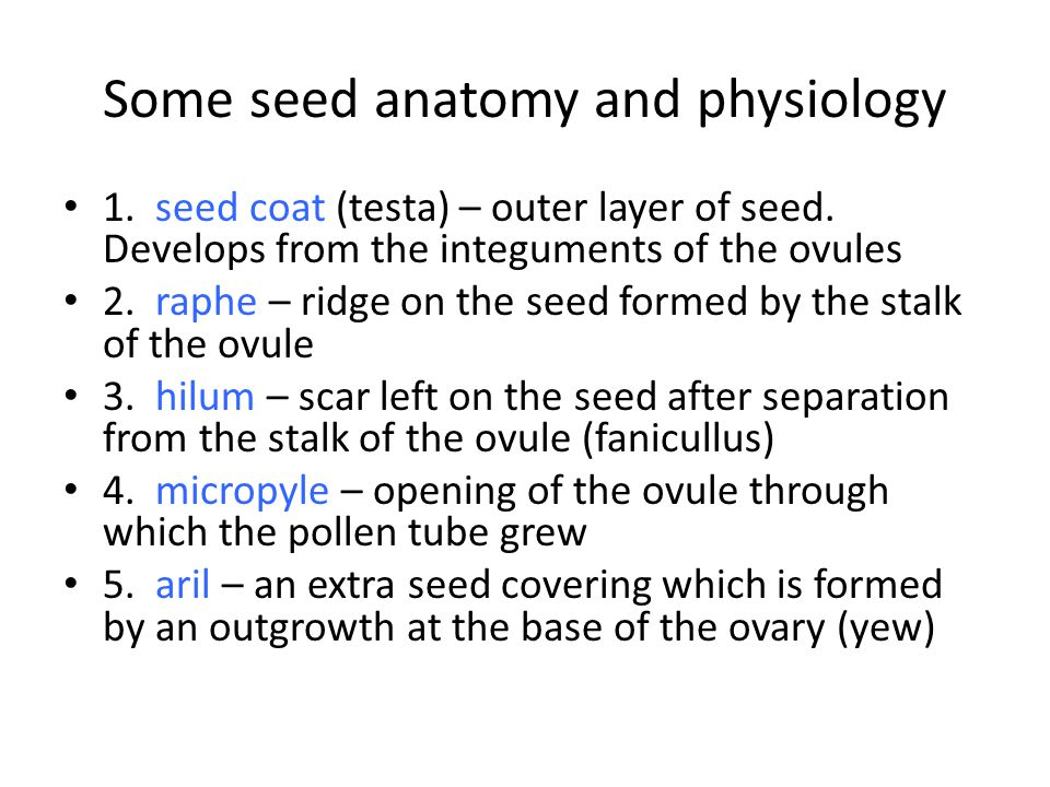 Some seed anatomy and physiology 1. seed coat (testa) – outer layer of seed.