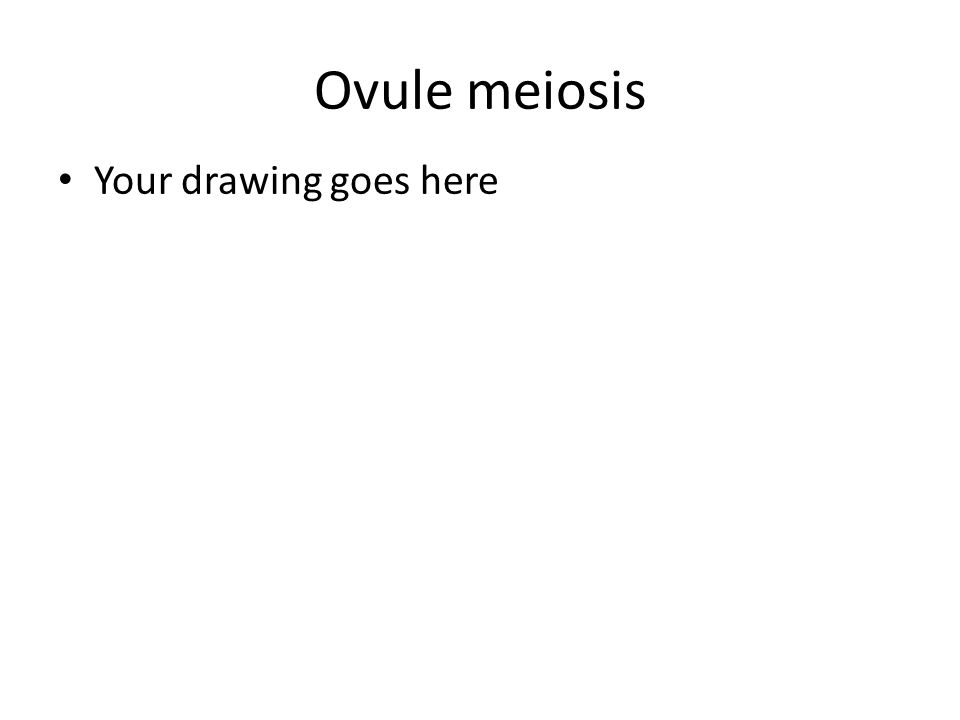 Ovule meiosis Your drawing goes here