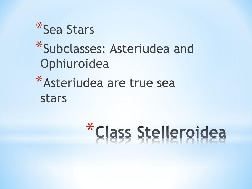 * Sea Stars * Subclasses: Asteriudea and Ophiuroidea * Asteriudea are true sea stars